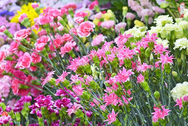 しゃるむで取り扱っているカーネーションなどの切り花