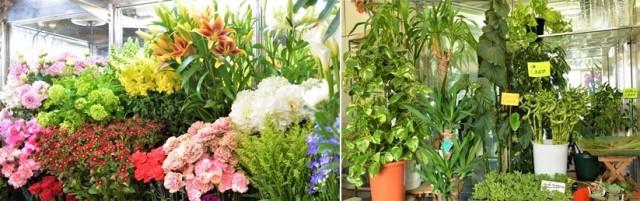 花や観葉植物がたくさんある花正生花店の店内