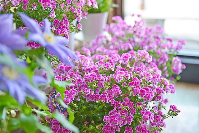 しゃるむで取り扱っている紫の花