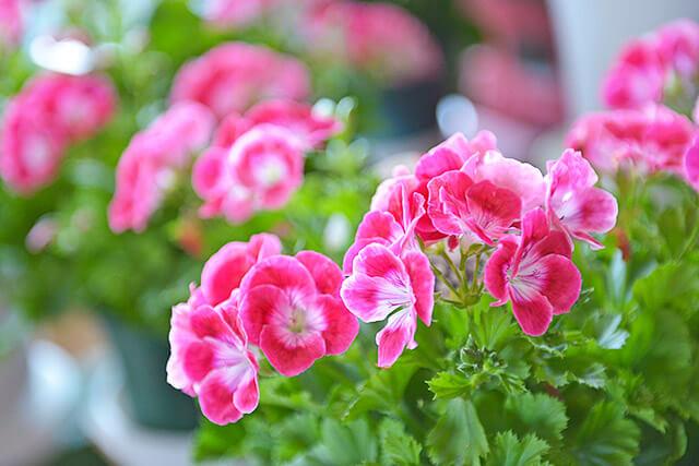 しゃるむで取り扱っている赤い花
