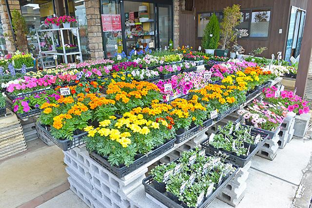 お店の外にもたくさんの花が並んでいる様子