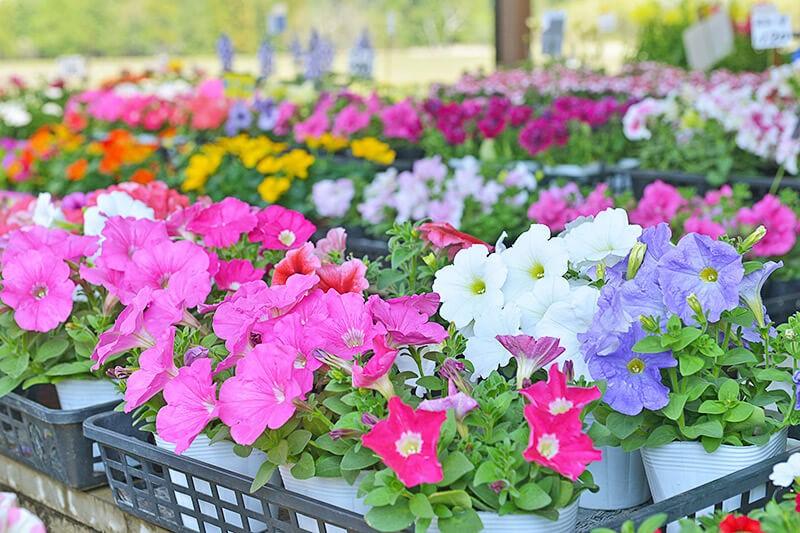 しゃるむの店先の花