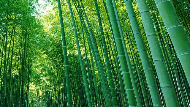 若竹の杜 若山農場 笹鳴りレストラン