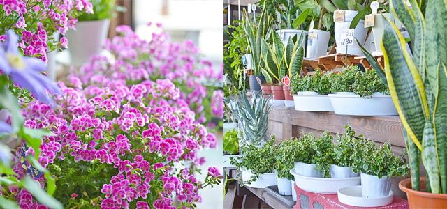 しゃるむで取り扱っている鉢物や観葉植物など