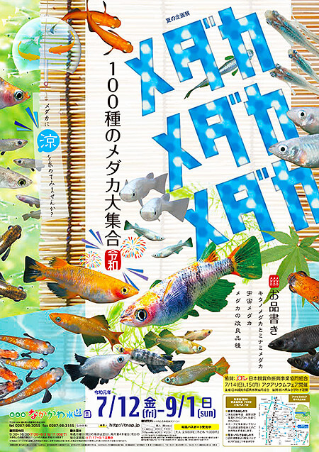 夏の企画展メダカ メダカ メダカ100種のメダカ大集合ポスター