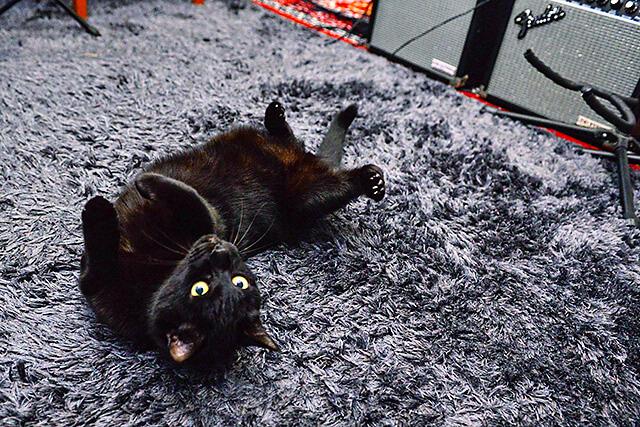 くろねこ音楽教室の看板猫のサスケちゃんが足元でゴロン