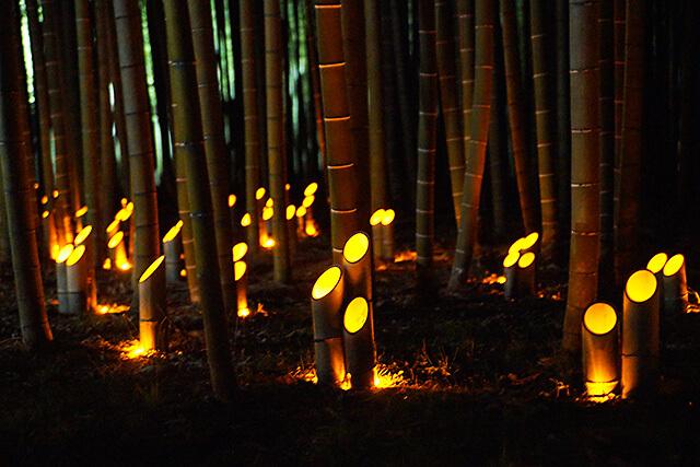 若竹の杜 若山農場 竹の根元に置かれたある竹あかり