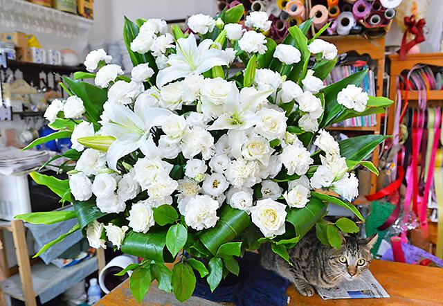 花物語本店 白いバラやユリの花などを使ったアレンジメントと看板猫ちゃん