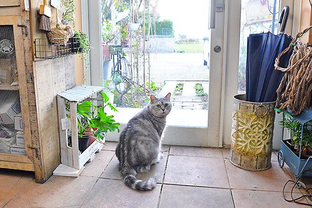 花物語 看板猫ちゃんが入り口でお客さまをお出迎え