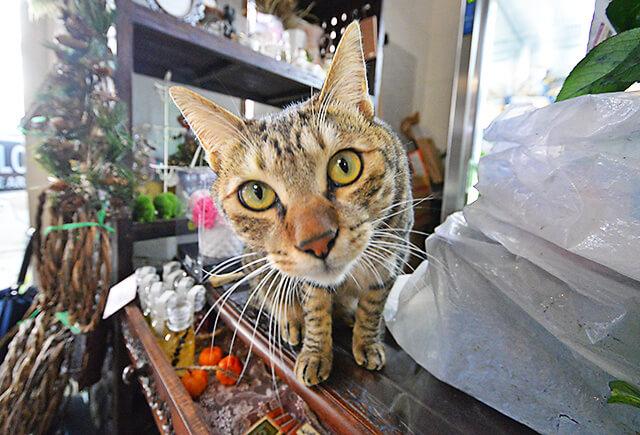 花物語の看板猫ちゃんが興味津々