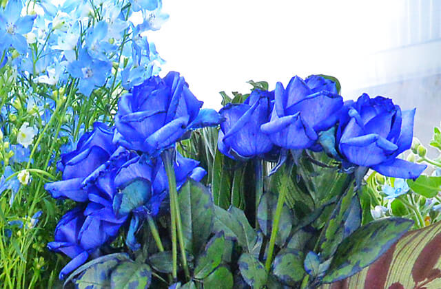花物語で染めているこだわりの青いバラ