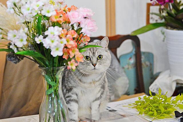 花物語本店 看板猫ちゃんと花