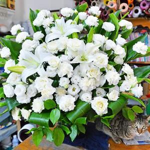 花と青いバラと猫に癒されて 花の贈り物なら「花物語」 – PR