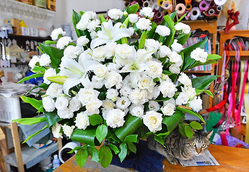花物語 白いバラやユリのアレンジメントとネコ