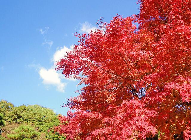 祥雲寺の紅葉