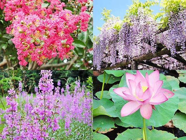 祥雲寺に春から夏にかけて咲く草花