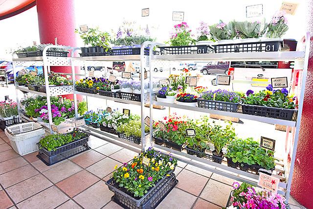 花うさぎ 店先にたくさん並べられた花