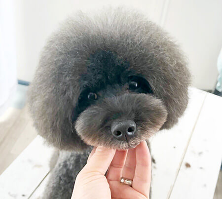 Dog Salon A.M.S わんちゃん