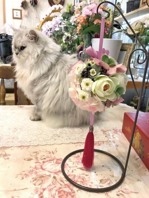 花物語 本店 猫と花