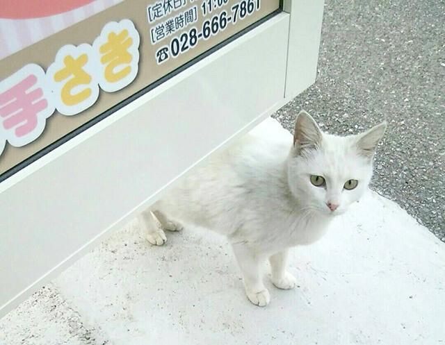 猫の手さき スタッフの白田さん